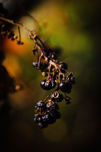 Ink Berries past their prime. EyeEm The Best Shots Inkberry Rural Scene Lakeside Nj Photography EyeEm Nature Lover New Jersey South Jersey Nj Njspots EyeEm Best Shots EyeEm New Jersey Leaves Insect Animals In The Wild Animal Wildlife Invertebrate Animal Themes Close-up Animal Nature No People Plant Outdoors Day Water Beauty In Nature High Angle View Focus On Foreground Selective Focus