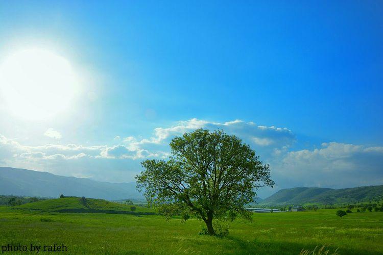 Sardash Tree Spring Nature Wawan