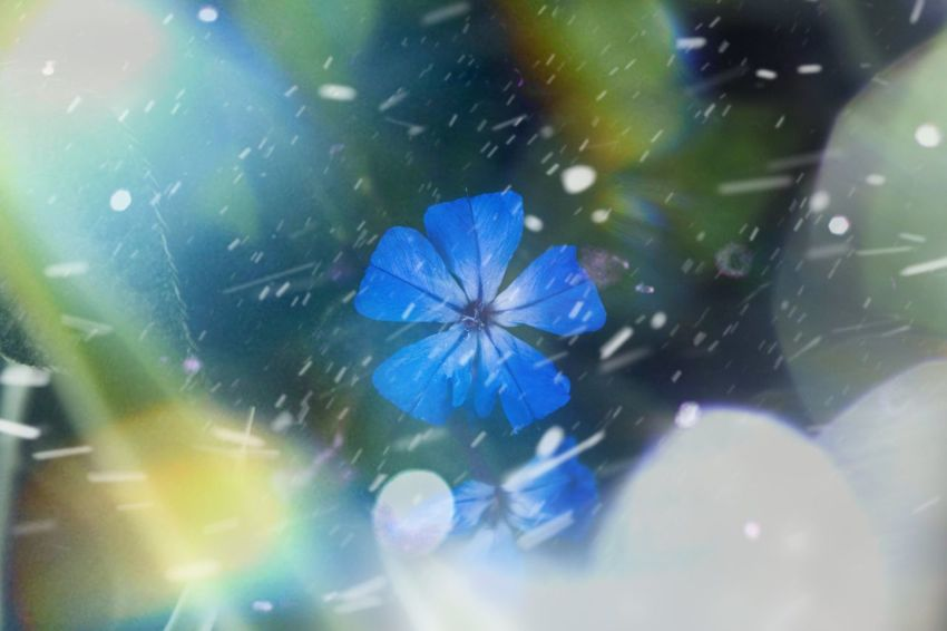 crazy winter edit depth of field Interesting Structured Awesome Fun Flower Flowers Winter Cold Snow Lens Flare Close-up Full Frame Window Blue Multi Colored No People Day Illuminated Fragility Nature Indoors