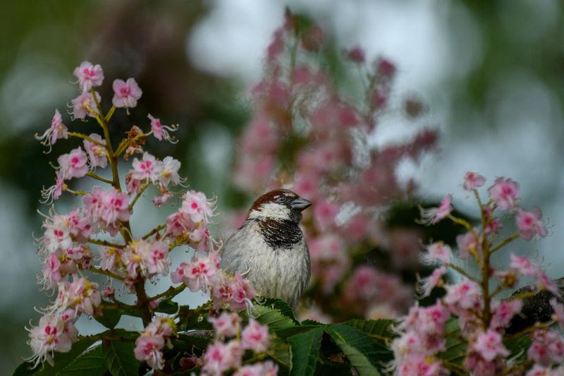 Close-up of bird perching on flowering tree.