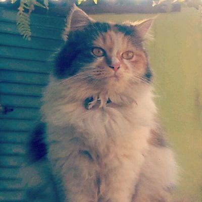 Catsofinstagram