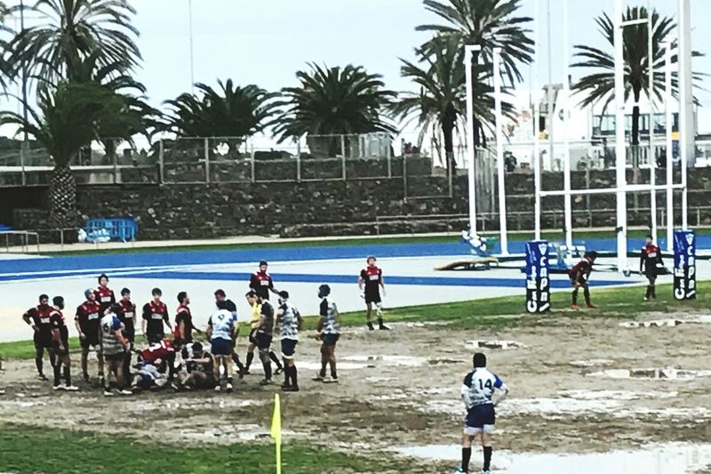 Palm Tree Tree Day Sport Men Real People Outdoors Adult People Teamwork Adults Only Rugby & Palms Rugby RugbyIsLife ARPN