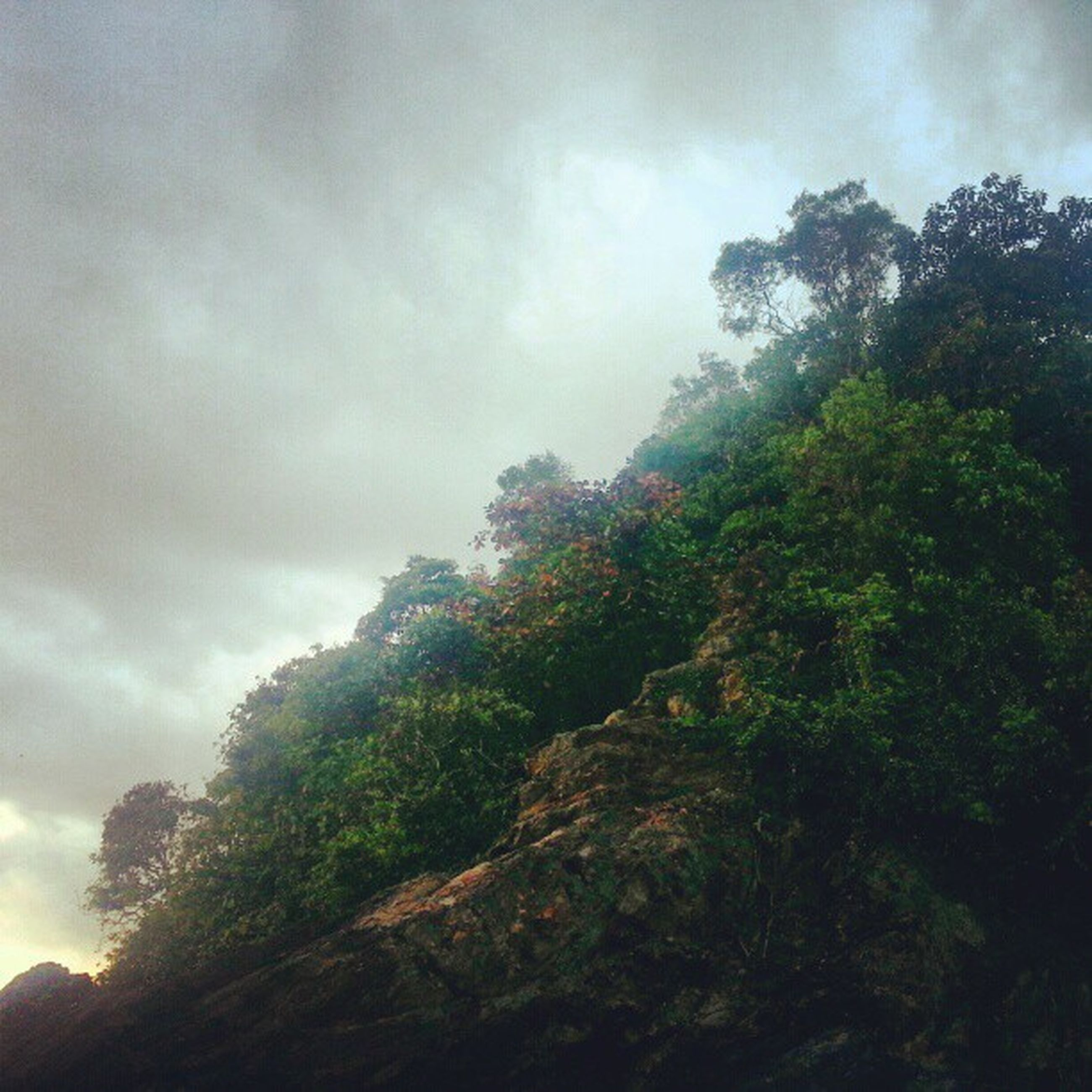 tree, sky, low angle view, cloud - sky, tranquility, growth, nature, tranquil scene, cloudy, beauty in nature, scenics, cloud, green color, day, outdoors, branch, no people, non-urban scene, idyllic, forest