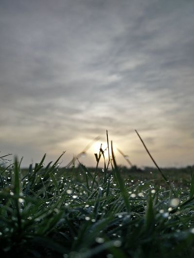 and the green grass grew laround .... #cloudporn #skyporn #beautiful #bestskysever #earlymornings  #Sunrise #dawn #walking #dewdrops #droplets #grass #lawn #grounds #greenery #Freshness #chilling #coolpic #nature_collection #EyeEmNaturelover #nature #photography #beautiful #breathing #deepfeel Flower Rural Scene Sunset Field Silhouette Uncultivated Storm Cloud Poppy Sky Close-up