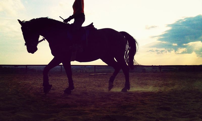 Workin Hard :) I Love My Horse Horses My Love Flicka ♥