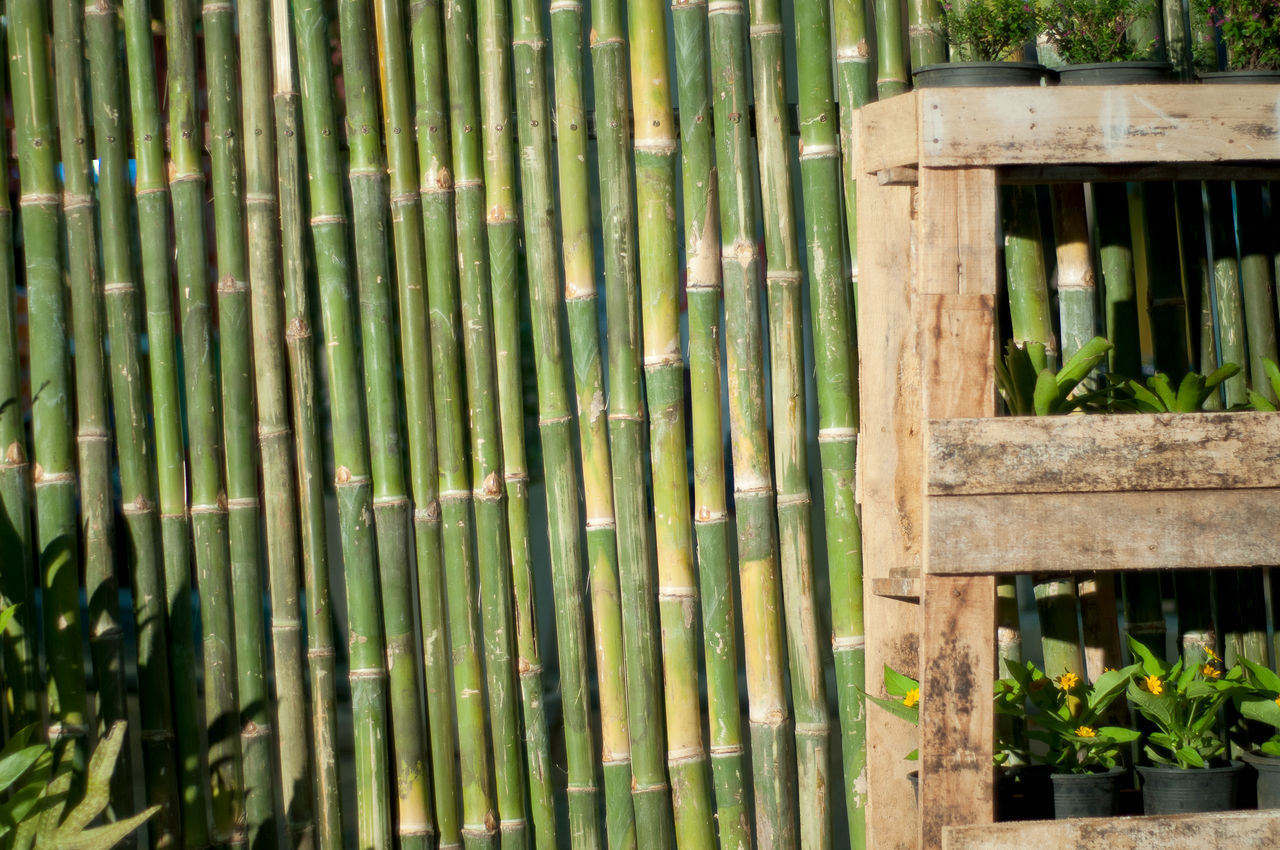 bamboo - plant, green color, bamboo grove, day, plant, bamboo, outdoors, bamboo - material, nature, no people, wood - material, textured, growth, close-up, animal themes