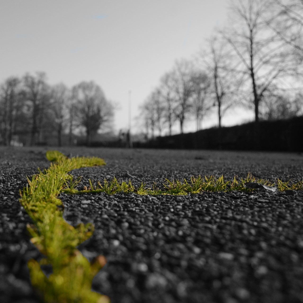 surface level, growth, nature, plant, day, bare tree, selective focus, tranquility, no people, outdoors, tree, beauty in nature, road, close-up, sky