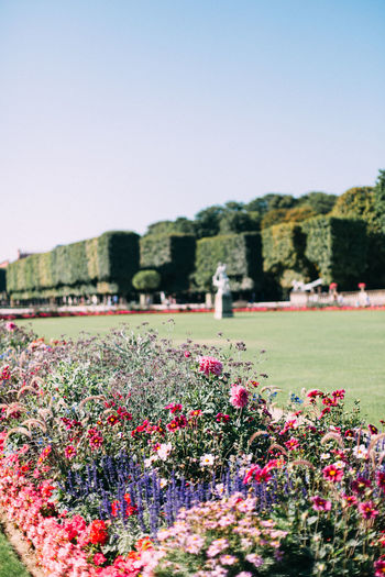 Jardin de Luxembourg, Paris, France. Architecture Beauty In Nature Blooming Botany Building Exterior City City Life Clear Sky Copy Space Day Flower Flowerbed Fragility France Freshness Growth In Bloom Jardin Luxembourg Nature Paris Paris, France  Pink Color Plant Travel Water