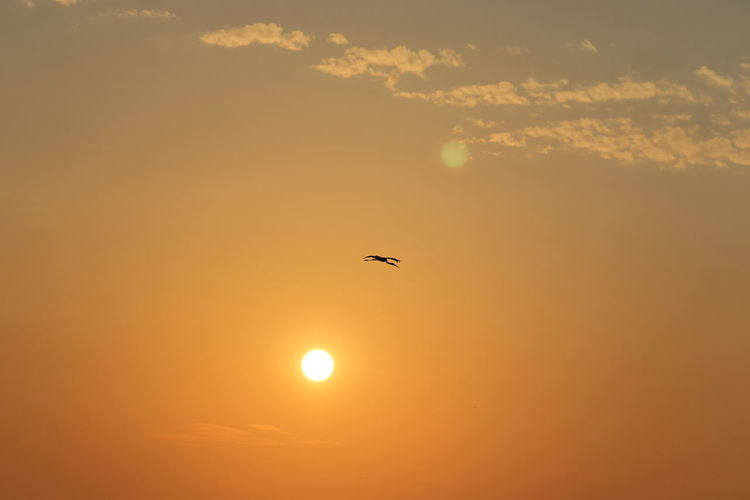 Silhouette bird flying in sky during sunset