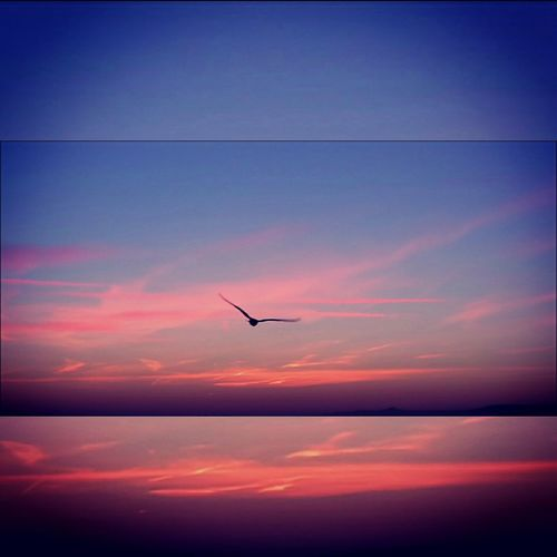Flying high in a beautiful sky❤💙❤ Sunrise_sunsets_aroundworld Sunrise Sunrise_Collection Tranquility Peaceful Bird In Flight Pink Streaky Clouds Pretty Skies Silhouette Beauty In Nature Seagull And Sky Blue Sky Cloudporn Skylovers Capture The Moment Vivid Colours  Colours Of Winter Urban Beauty No People Bristol, England Millennial Pink Breathing Space EyeEmNewHere Investing In Quality Of Life