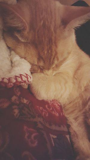 Happy kitty, sleepy kitty Close-up Indoors No People Kitty!  Cat Cats Of EyeEm