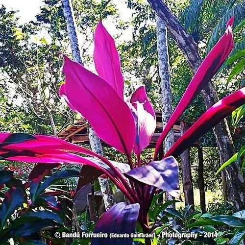 Fotografia Fotografiaderua Fotografo Nature natureza plantas mato