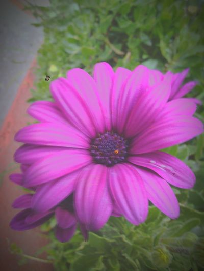 Flowers 🍃🌸🌹🌺🌼🌻