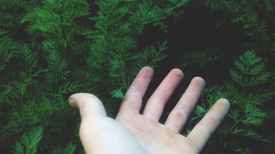 Cropped hand gesturing by plants