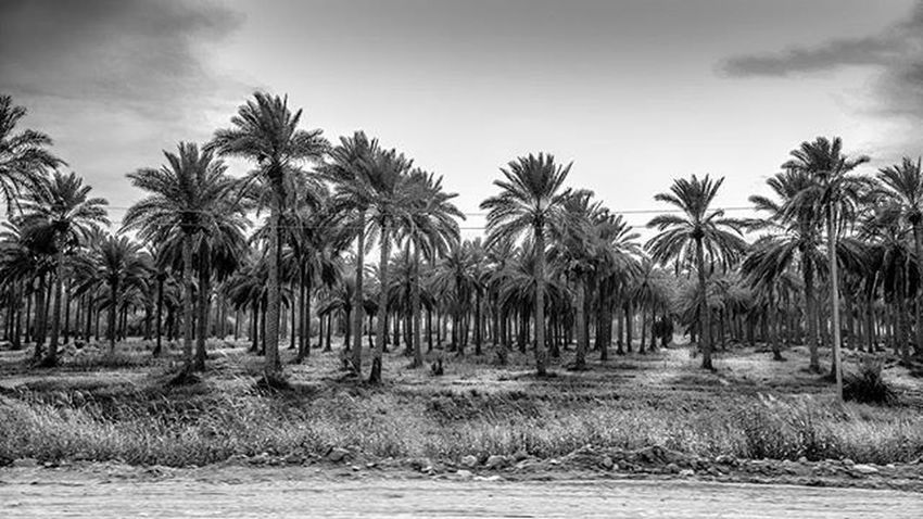 Sony Sonyrx100 Rx100 Palm Blackandwhite Monochrome Landscape