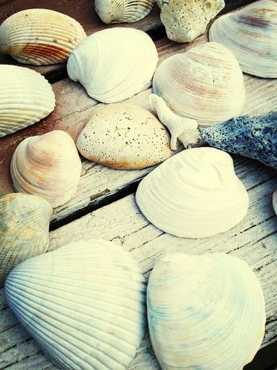 Seashells Summertime Hello World Beach