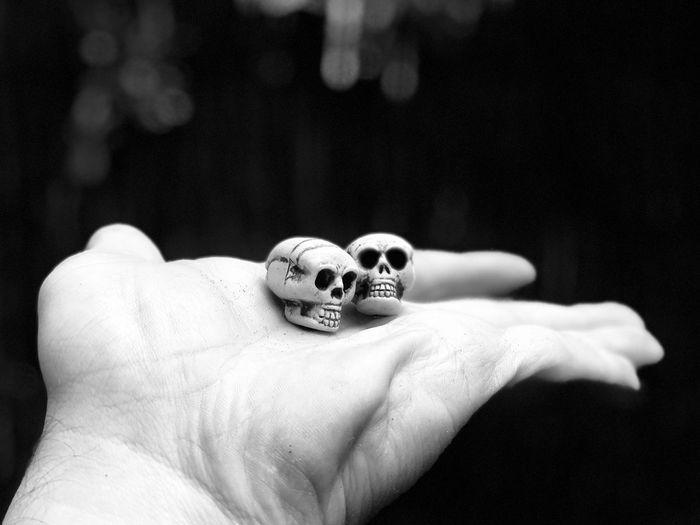 Close-up of hand holding human skulls