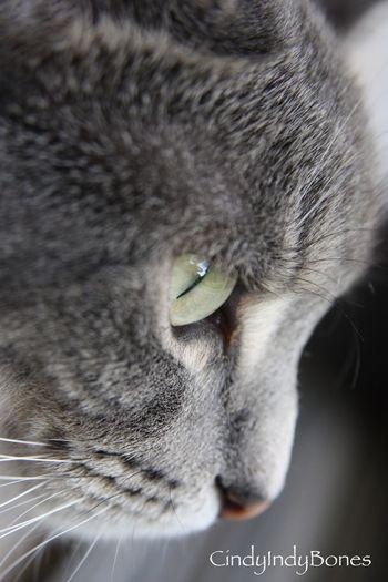 My furbaby Chloe Tadaa Community Chloe The Cat Cute Pets Cat