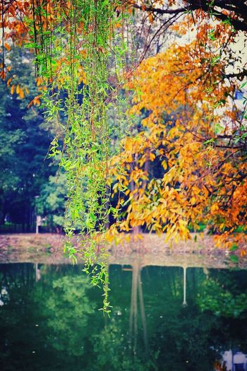Flowers, Nature And Beauty Springtime Spring Is Coming  Lakeside Lake View Willow Tree Willow Anna Falleni Photography