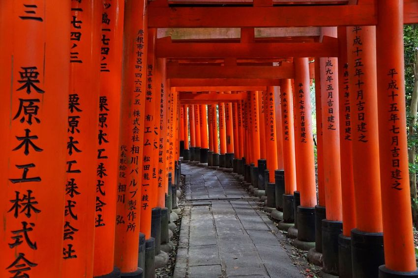 Torii Gates Torii Gate TORII Tori Orange Color In A Row The Way Forward Architectural Column Spirituality Place Of Worship Religion Architecture Travel Destinations Built Structure Gate Shrine Tourism