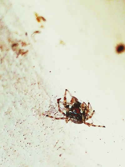 Taking Photos Hanging Out Wall Climbing Climbing Insect Paparazzi My Smartphone Life Spider Spiderworld Macro Spider Spidey