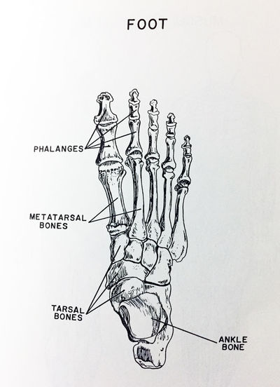 anatomy Hand Bones Skull Bones Anatomy Close-up Communication Day Foot Bones Learning No People Paper Sketch White Background
