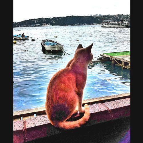 Cat♡ Catstar #cat #catnap #catoftheday #catpic #catlovers #catsconnect #catinstagram #catsofinstagram #gato #gatinhos #gatto #garfield #petstagram #premierpet #photooftheday #petsofinstagram #picoftheday #petlovers #instabicho #ilovecats #ilovemypet #issovici Fotografheryerde Foto_turk Cengelkoy Istanbulcity Istanbullovers Istanbuldayasam Istanbul - Bosphorus