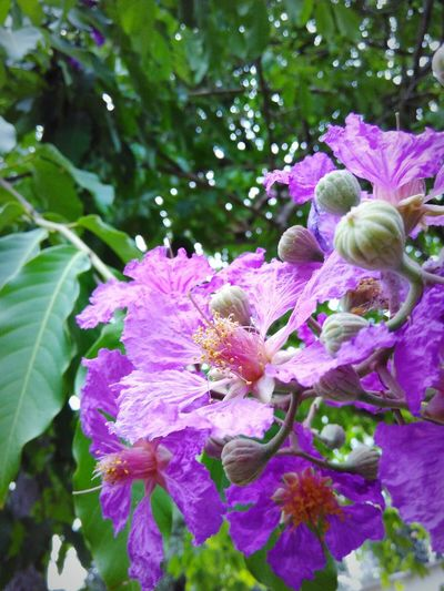 Flower Beauty In Nature Plant Purple