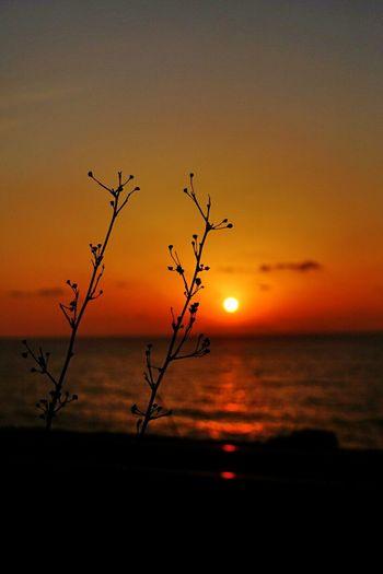 枯草のデュエット🍂🍂~ Duet of the Dry Grass ~ 夕暮れふぇち Sunset Sunset_collection Sunset Silhouettes EyeEm Nature Lover Landscape Darkness And Light The Purist (no Edit, No Filter) ボケ味ふぇち Bokeh Bokeh Love Getting Inspired Kagoshima 今週もありがとうございました☺✋