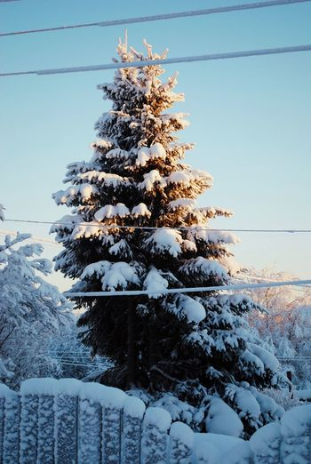 Snow covered tree against sky