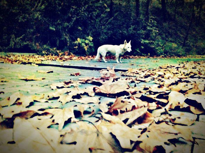 Dog Animals Natural Followme Green Autumn Leaf 🍂 Leafs Autumn Colors