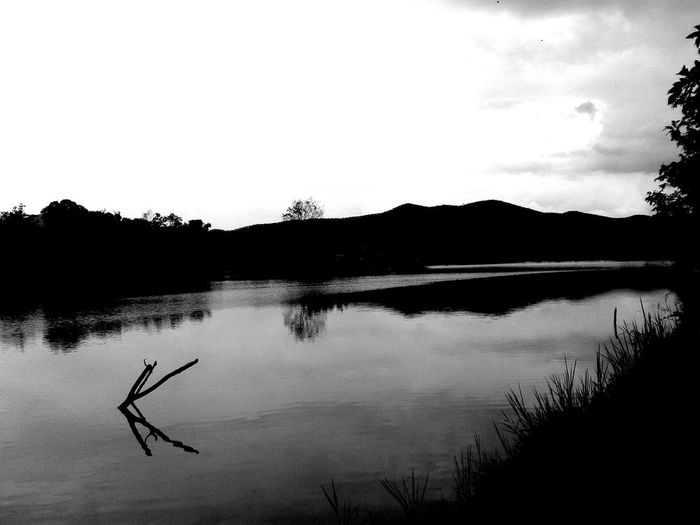 Bw_collection Black & White B_w Nature_collection