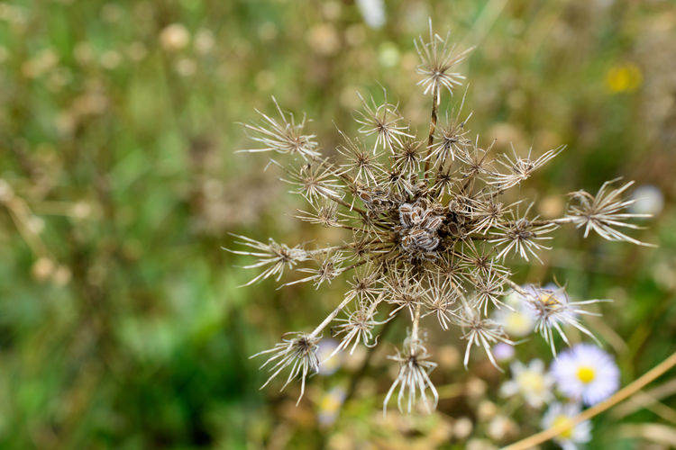 Flower Leaded Flower Head Faded Flower Nature Plant Faded Close-up Autumn Colors Autumn
