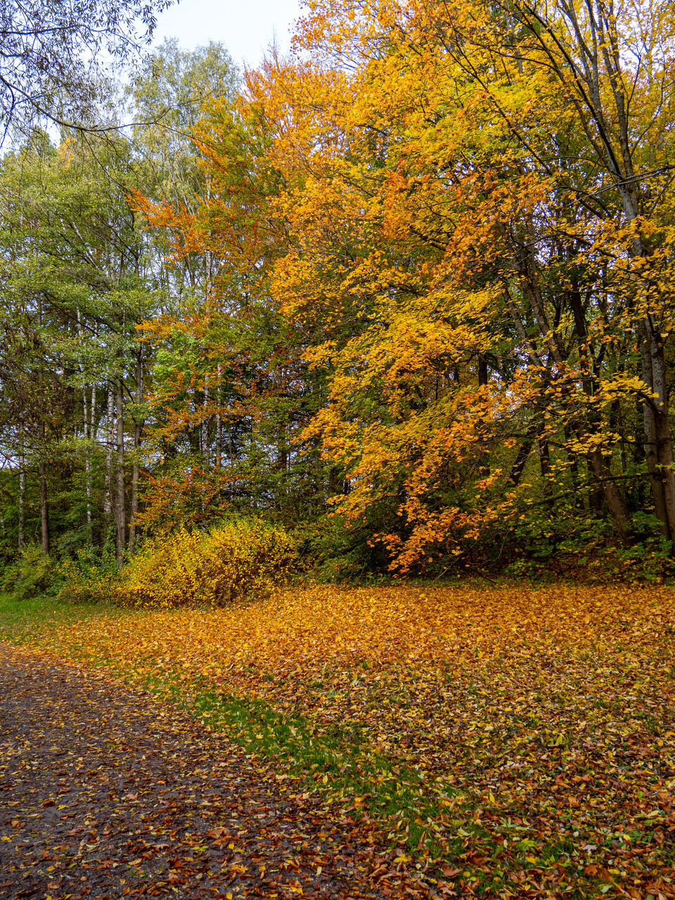autumn, tree, change, plant, beauty in nature, leaf, plant part, tranquility, orange color, land, nature, growth, scenics - nature, day, yellow, no people, forest, tranquil scene, non-urban scene, idyllic, outdoors, fall, autumn collection, leaves, natural condition