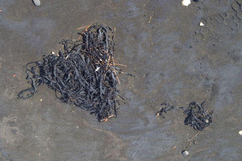 Beach Coast Heart Nature New Plymouth New Zealand Sand Seaweed Stones Taranaki