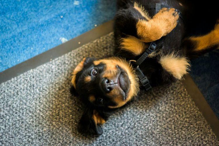 Hello, my name's Emma. Please don't hurt me... EyeEm Animal Lover Dogs EyeEm EyeEm Gallery EyeEmBestPics EyeEm Best Edits Eye4photography  EyeEm Masterclass Taking Photos Enjoying Life