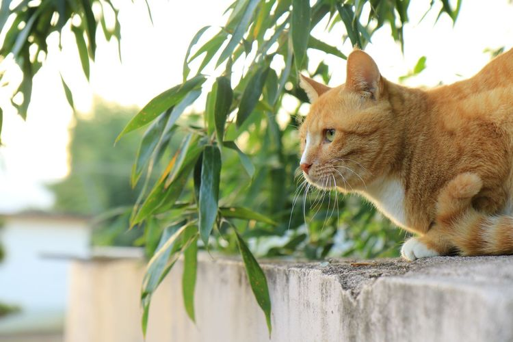 Close-Up Of Cat On Terrace