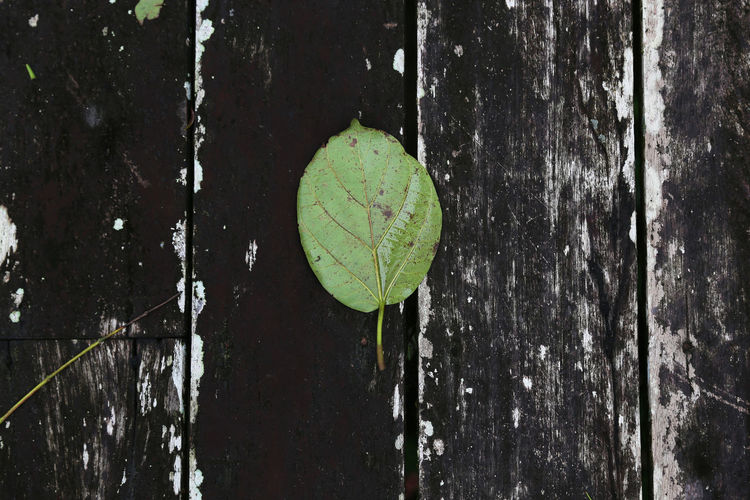 Close-up of leaf against lake