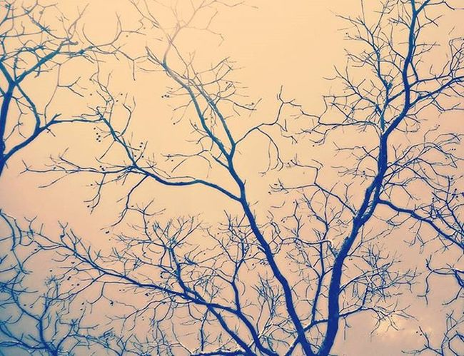 Branches of a tree 🌳 spreading like blood veins. Instatree Picforu Instaphotogram Instanature .
