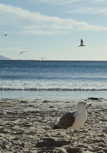 Beach Sea Sand Bird Animals In The Wild Horizon Over Water Animal Wildlife Animal Themes Landscape Nature Flying Water Sunlight Outdoors Seagull Beauty In Nature