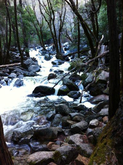 Nature Love Yosemite National Park EyeEm Nature Lover