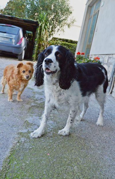 🐶 Italy Nikon D3200 Nikonphotography Perugia Nikon EyeEm Italy Photooftheday Dog Photo
