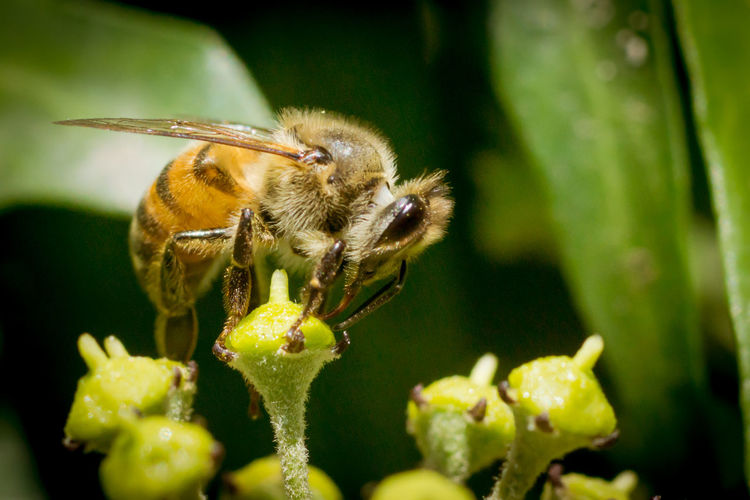 Bee Close-up Color Image EyeEm Best Shots Horizontal Nature Outdoors Photographer Plant Yellow