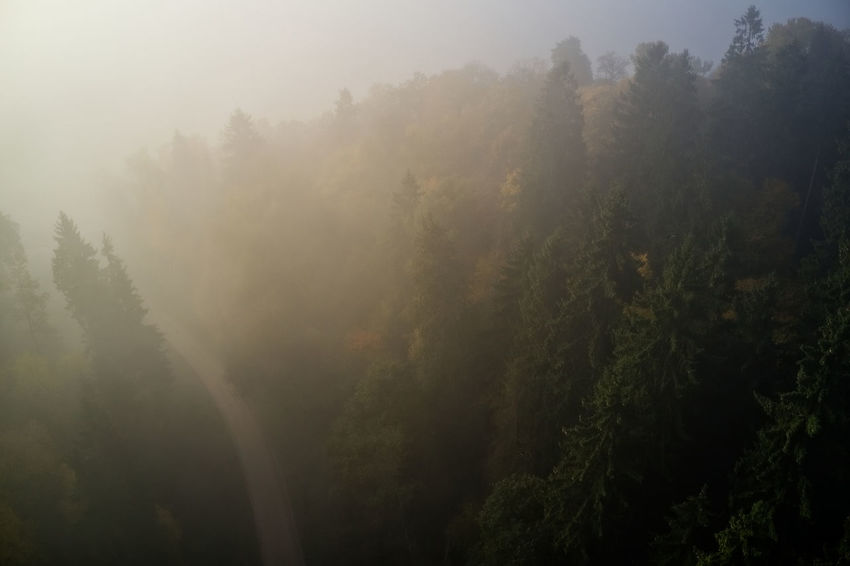 Misty morning in the woods Beauty In Nature Day Environment Evergreen Tree Fog Forest Green Color Growth Hazy  Land Morning Nature No People Non-urban Scene Outdoors Plant Scenics - Nature Tranquil Scene Tranquility Tree WoodLand