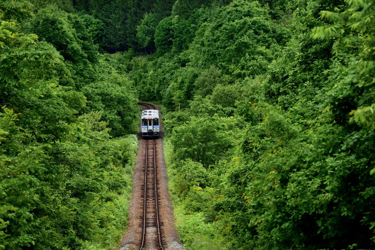 High angle view of train on railroad track amidst trees in forest