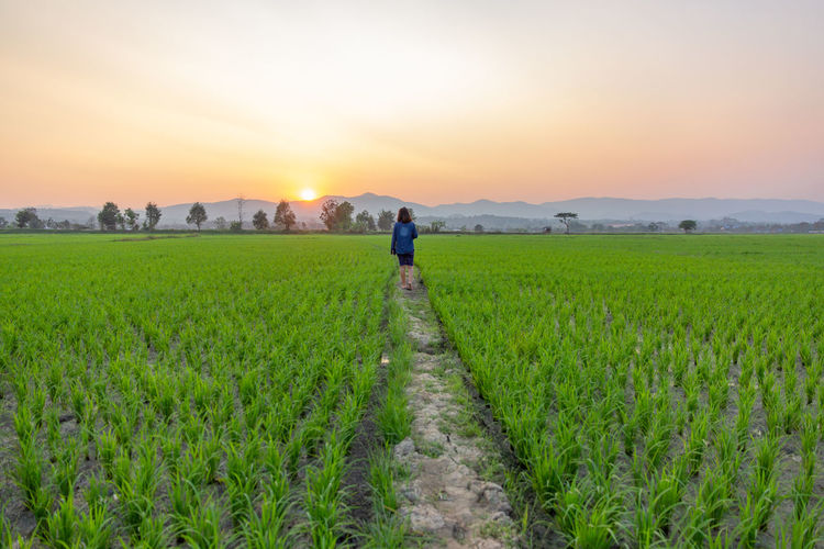 Asian woman tourist looking at green rice field over sunset shining through the mountains. Landscape Agriculture Sky Plant Field Land Scenics - Nature Environment Green Color One Person Rural Scene Crop  Nature Beauty In Nature Growth Farm Sunset Tranquility Grass Tranquil Scene Farmer Sun Outdoors