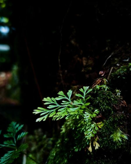 Close-up of fresh green plant in forest
