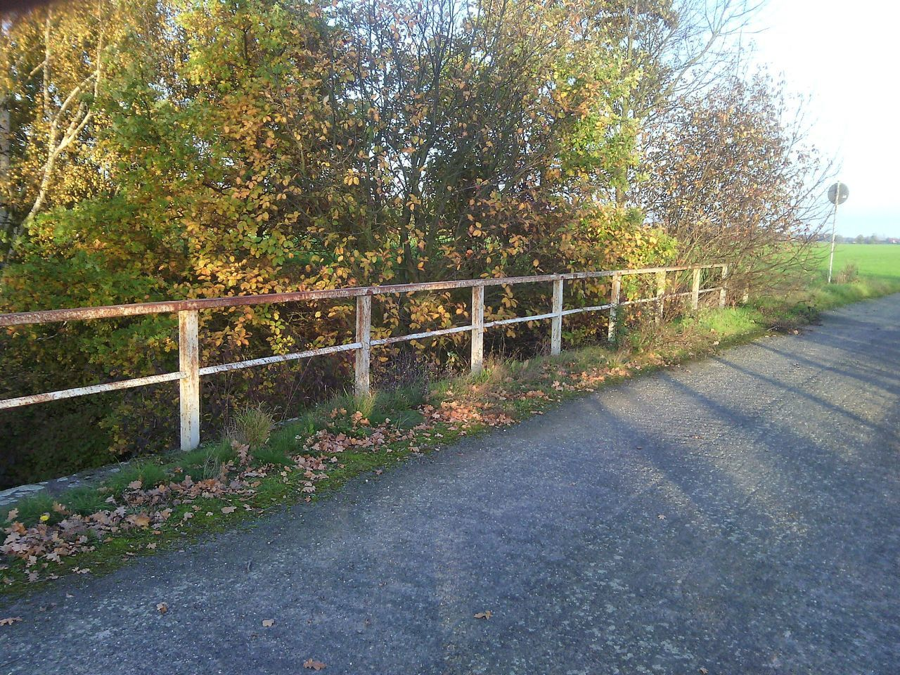 tree, railing, nature, outdoors, road, the way forward, day, no people, bridge - man made structure, scenics, beauty in nature, sky