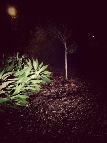 Walking Thru Balboa Park At Night