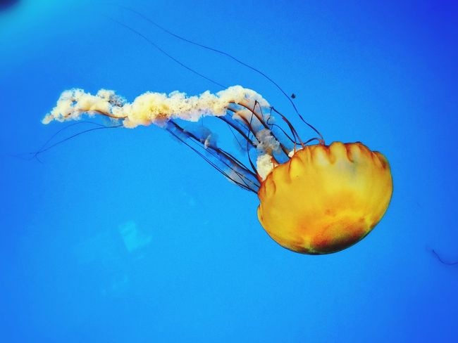 Jelly Fish Nature is amazing and so beautiful!